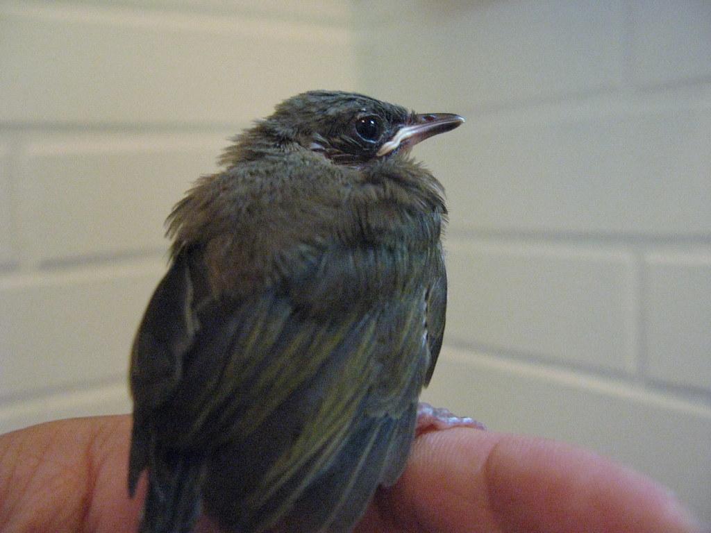 20080604-羽毛終於乾了