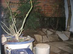 vườn (Bich Ha 612) Tags: garden vườn