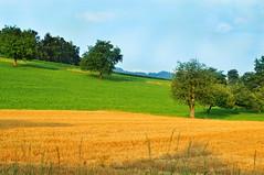 Three colors landscape