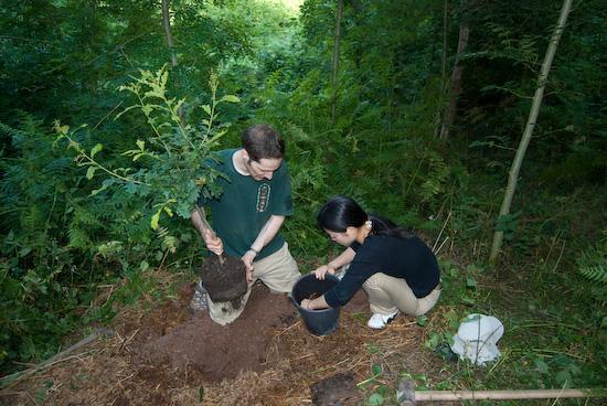 tree_planting_9182