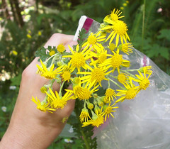 Spongey flowers