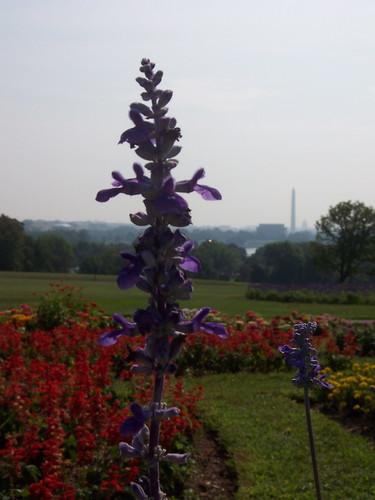 Iwo Jima/Netherlands Carillon Gardens