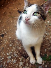 sweet cat (FriaLOve) Tags: pet animal cat soft sweet prizren kosova frialove