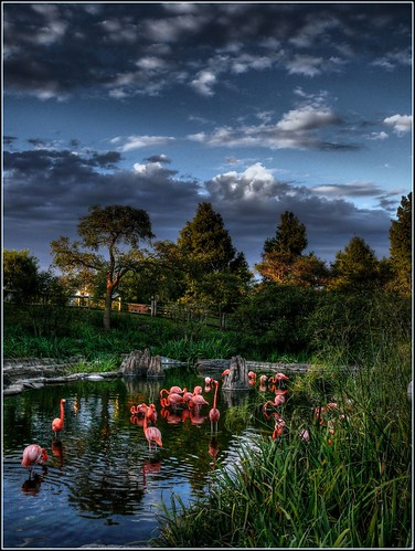 Surrealistic garden