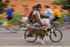 Fotomaratón 2008. Ciclovía Bogotana (EstudioBLAU) Tags: dog chien cane bogotá perro rasta ciclovia fotomaratón2008