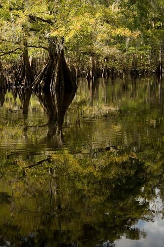 fisheating creek september 21 010