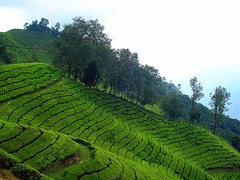 Munnar - A Summer gateway of Kerala... (ArunaR) Tags: india sony hill kerala hillstation touristspot teaplantation aruna munnar aplusphoto