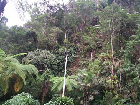 Suasana hutan