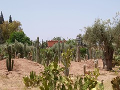 P6291555 (Trysk ) Tags: sahara desert oasis morocco maroc atlas marrakech majorelle souk menara koutoubia palmeraie oued jaamalelfna