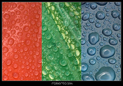 RGB (RoberZ) Tags: blue red color macro green nikon gota rgb raindrop d40