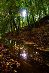 Habitual Experimentation (jasontheaker) Tags: uk autumn winter england sun castle leaves forest movement woods earth vibrant northyorkshire skipton landscapephotography cannel jasontheaker pprowinner