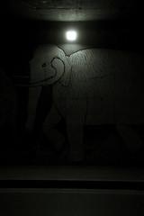 Prato prehistory 2 (-dubliner-) Tags: street bridge lamp iceage night graffiti mural mammoth prato evoluzionedellaspecie evolutionofthespecies glacialage