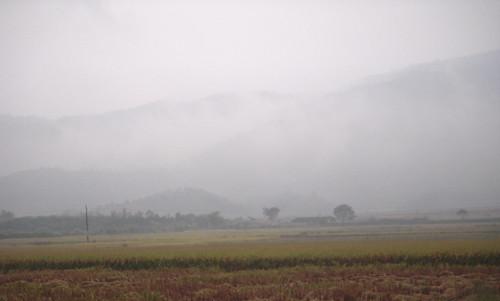 Foggy day - 2