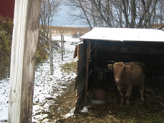 Unna's hut