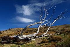 In the Sierra Nevada (HisGlitteringEye) Tags: sky tree clouds landscape spain andalucia sierranevada supershot colorphotoaward platinumheartaward photoartbloggroup flickrcinated hisglitteringeye