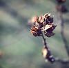 closed for the season (ginnerobot) Tags: trees winter favorite green nature 50mm closed december little bokeh details wither stems hbw natureycrap notblossoming