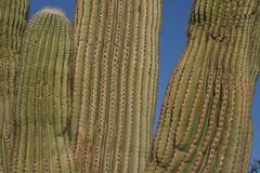 phoenix botanical gardens 16