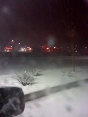 Wintery Yucca