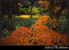 Color of The Autumn (luqingyu) Tags: autumn color japan landscape leaf mood yokohama rvp carlzeiss sankeien blueribbonwinner contaxrx fujifilmvelvia planart1450 superbmasterpiece diamondclassphotographer flickrdiamond