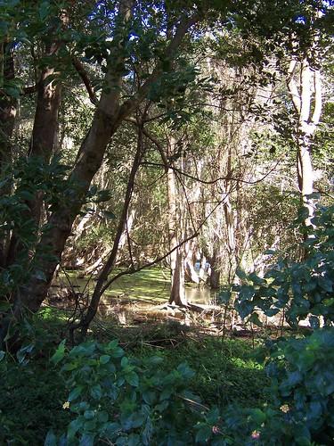 Paperbark Forest Kerrawah Blvd Woy Woy