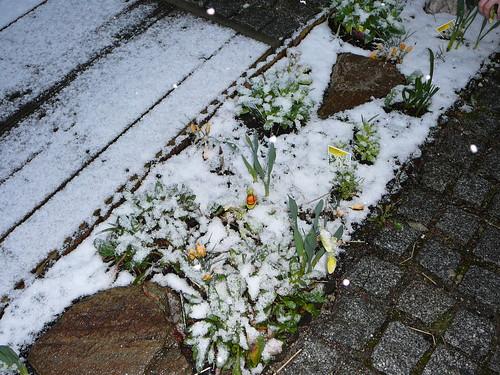 winterlicher Ostersonntag 2008 (01)