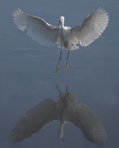 Landing mirror