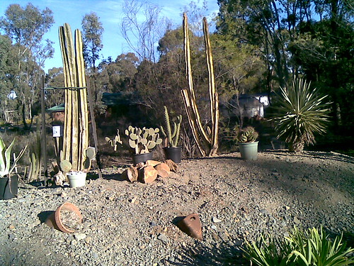 Show us  your cacti - Page 2 2563769912_5c1cda10cd