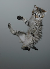 [フリー画像] 動物, 哺乳類, ネコ科, 猫・ネコ, 跳ぶ・ジャンプ, 200807151100