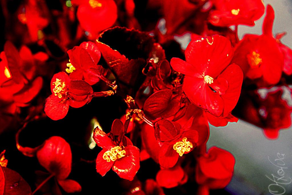floresrojasotxolua