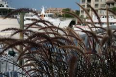 Harbor (Susan Isbell Images) Tags: grass harbor boat southcarolina depthoffield yachts hiltonhead harbortown photofaceoffwinner pfogold froglover1979