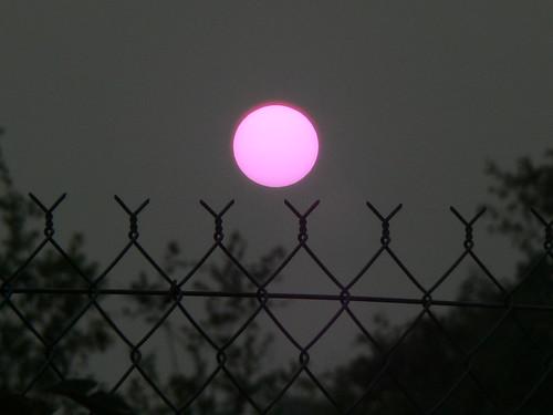 Wild Fire Sun