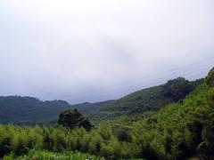 綠光森林富野綿羊牧場