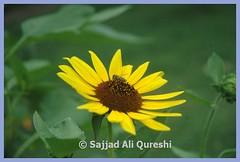 DSC_0138 (Sajjad Ali Qureshi) Tags: pakistan asia islamabad saarc