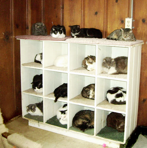 catshelvs