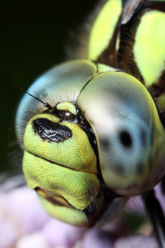 IMAGE: http://farm4.static.flickr.com/3188/2715789005_a93e1f742e_o.jpg