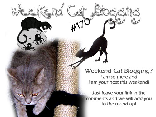 Weekend Cat Blogging #170