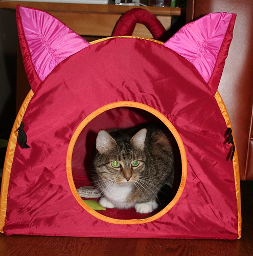 Who'd have thunk the evil cat-hut would be such a hit?
