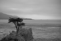 lone cypress (Nicola Zuliani) Tags: california sea usa tree nature blackwhite cipresso lonelycypress nizu nicolazuliani nnusa wwwnizuit