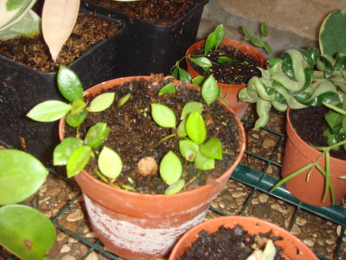 Mis plantas y sus flores 2954812997_50ab19481b