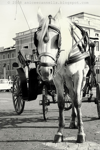 Carrozza da te.