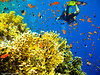 The another Life (Sulaiman_Q8) Tags: underwater diving sulaiman sharmelshiekh alsalahi goldstaraward multimegashot