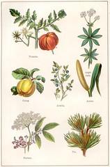 plantes medicinales et alim 2