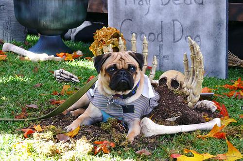 Graveyard Guard