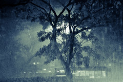 What to delight in, what to sorrow for (yyelsel_ann) Tags: rain canon singapore bishan thecomedyoferrors grained lightfromstreetlamp blueprocessed notextureadded nearjunction8 phototakenwhilewaitingforabus highschoolcrushworethisperfume layersgalore highschoolmemory imhavingaheadache photoshopcurvespulling
