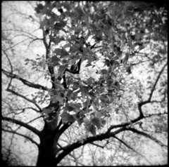 (devon cummings) Tags: park nyc 6x6 brooklyn holga trix urbannature prospect blackwhitephotos