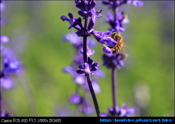 9711-新社花海:Date with Bee_050.jpg