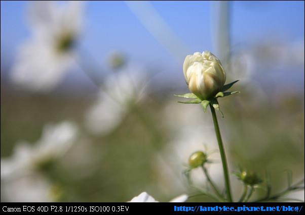 9711-新社花海:Date with Bee_068.jpg