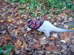 A fall jog