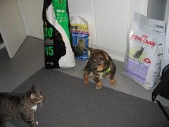 IMG_2339 (Niina J.) Tags: eläimet koirat osmo