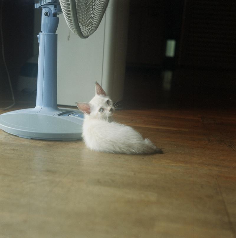 沖縄の子猫